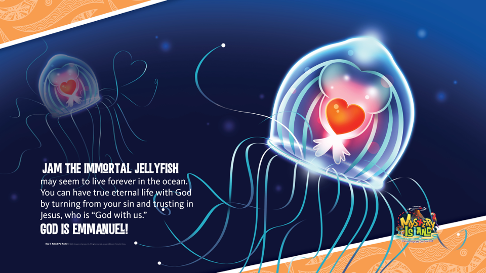 Slide 51 - Jellyfish